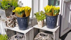 Tulipani gialli in secchi neri Fotografie Stock Libere da Diritti