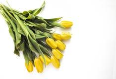 Tulipani gialli su bianco Fotografia Stock