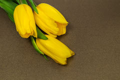 Tulipani gialli su carta, Fotografie Stock