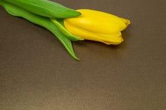 Tulipani gialli su carta, Immagini Stock