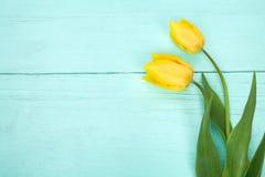 Tulipani gialli su fondo blu-chiaro di legno Immagine Stock