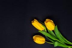Tulipani gialli su fondo nero Fotografie Stock Libere da Diritti