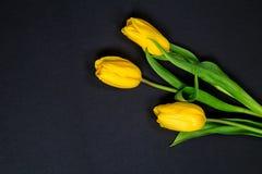 Tulipani gialli su fondo nero Immagini Stock