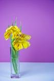 Tulipani gialli su priorità bassa dentellare Fotografia Stock