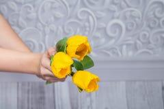 Tulipani gialli in sue mani Immagini Stock