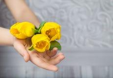 Tulipani gialli in sue mani Fotografie Stock