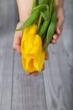 Tulipani gialli in sue mani Immagini Stock Libere da Diritti