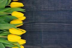 Tulipani gialli sui precedenti di legno scuri con lo spazio della copia fotografie stock
