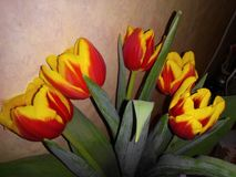 tulipani Giallo-rossi in un mazzo Immagini Stock Libere da Diritti