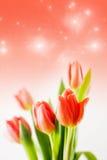 Tulipani magici Fotografia Stock