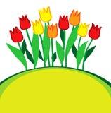 Tulipani multicolori Immagine Stock Libera da Diritti