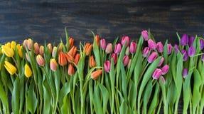 Tulipani nei colori luminosi Fotografie Stock Libere da Diritti