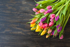 Tulipani nei colori luminosi Fotografie Stock