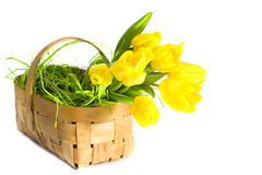 Tulipani nel cestino Fotografia Stock Libera da Diritti