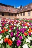 Tulipani nella fortezza di Akershus Fotografie Stock