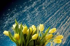 Tulipani nella pioggia Fotografia Stock Libera da Diritti