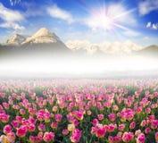 Tulipani nella regione carpatica Fotografia Stock Libera da Diritti
