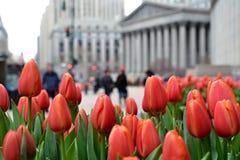 Tulipani in New York immagini stock