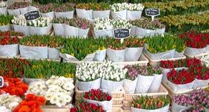 Tulipani olandesi fotografie stock libere da diritti
