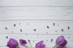 Tulipani porpora con le foglie verdi, pietre porpora Spazio per testo Fotografie Stock Libere da Diritti