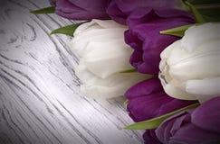 Tulipani porpora e bianchi con Libro Bianco su un fondo di legno bianco Spazio per testo Il giorno della donna 8 marzo Fotografie Stock