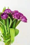 Tulipani porpora nel vetro Fotografie Stock