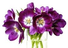 Tulipani porpora in un vaso di vetro fotografia stock libera da diritti
