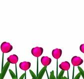 Tulipani rosa background-01 illustrazione di stock