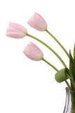 Tulipani rosa-chiaro fotografie stock libere da diritti