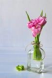 Tulipani rosa del fiore su fondo bianco fotografia stock