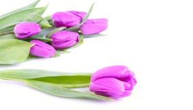 Tulipani rosa Fotografie Stock Libere da Diritti