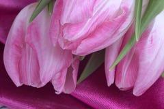 Tulipani rosa su fondo rosa Fotografia Stock Libera da Diritti