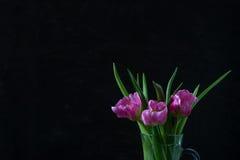 Tulipani rosa su fondo scuro fotografie stock libere da diritti