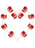 Tulipani rossi Fotografia Stock Libera da Diritti