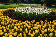Tulipani rossi Bello mazzo dei tulipani Tulipani variopinti Fotografie Stock Libere da Diritti