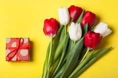 Tulipani rossi e bianchi Immagini Stock Libere da Diritti