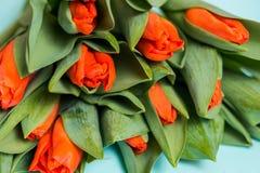 Tulipani rossi e due cuori di legno sopra fondo di legno blu, tulipani rossi su un fondo blu Vista da sopra posto per il vostro I Fotografia Stock