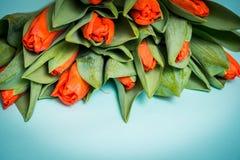 Tulipani rossi e due cuori di legno sopra fondo di legno blu, tulipani rossi su un fondo blu Vista da sopra posto per il vostro I Fotografia Stock Libera da Diritti