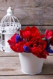 Tulipani rossi e fiori blu dei muscaries in secchio e nel candl bianchi fotografia stock