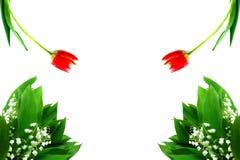 Tulipani rossi e mughetto 8 marzo bianco Fotografia Stock Libera da Diritti