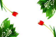 Tulipani rossi e mughetto 8 marzo bianco Fotografia Stock