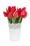 Tulipani rossi in flowerpot fotografia stock libera da diritti