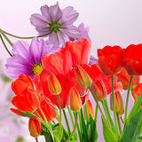 Tulipani rossi freschi del giardino su fondo astratto Fotografie Stock