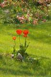Tulipani rossi nell'erba, ritratto Fotografie Stock