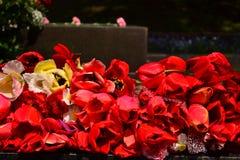 Tulipani rossi per fondo Fotografie Stock Libere da Diritti