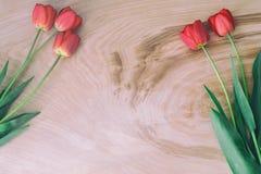Tulipani rossi su fondo di legno leggero immagini stock