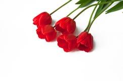 Tulipani rossi su un fondo isolato bianco Fotografia Stock
