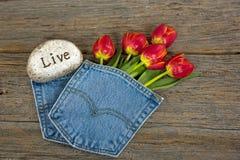 Tulipani rossi in tasca blu del tralicco Immagine Stock Libera da Diritti