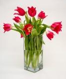 Tulipani rossi in un vaso Immagini Stock