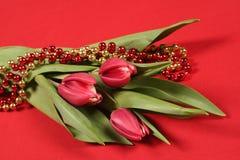 Tulipani su colore rosso Fotografia Stock Libera da Diritti